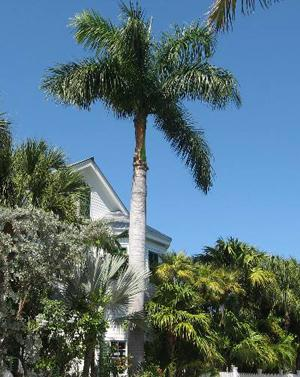 Palm Trees–Not Trees After All!